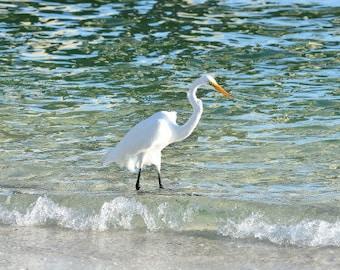Great Egret Photograph, Beach Photograph, Ocean Photo, Beach Wall Art, Coastal Art