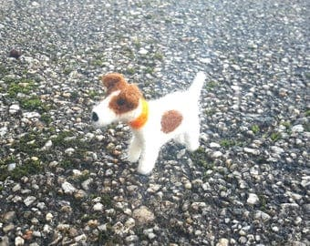Tiny Jack Russell terrier
