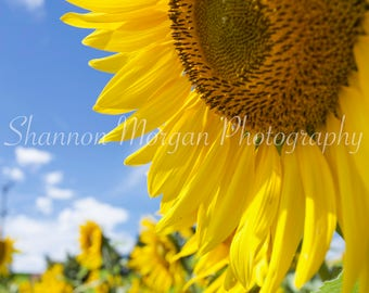 Sunflower Field. Sunflowers. Summer. Wall Art. Digital Download. Home Decor. Travel Photography. Macro Photography.