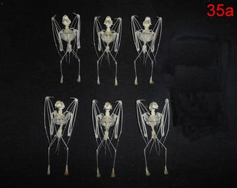 Taxidermy Real Bat  Rhinolophus Lepidus Skeleton 5 Pcs