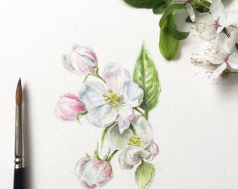 Blossom, original botanical watercolour illustration, 6''x 4''