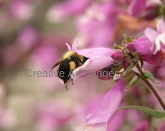 A Bee In  A Pink Flower #224