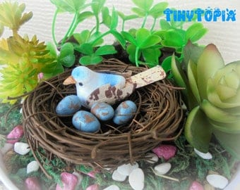 Miniature Bird's Nest