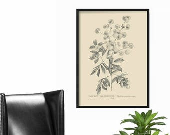 Farmhouse Decor Print  Extra Large - Botanical Print - French Country Decor - Cottage Decor - Rustic Home Decor - Vintage Country Print