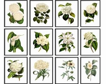 White Botanical Print Set - Botanical Set of 12 Prints - Prints - Vintage Botanical Prints - White Botanical Prints - Wall Art - Home Decor