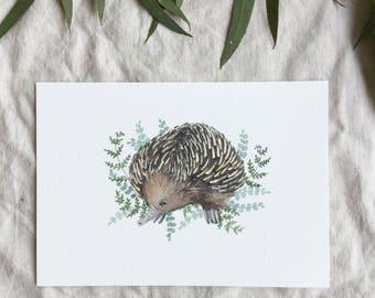 Australian Echidna A5 Print
