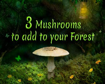 Whimsical Forest and Mushroom