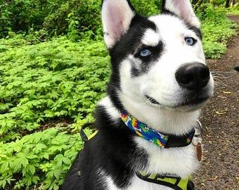 Fun Hippie Tie Dye Dog Paws and Bones Dog Collar
