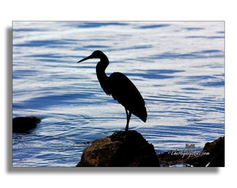 Pelican Silhouette {Photography} for Framing, Greeting Cards, and Postcards