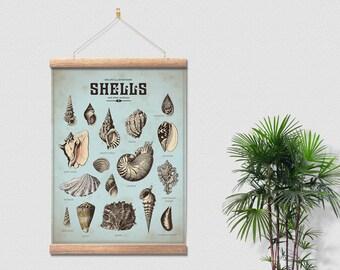 Sealife Shells Canvas Ready To Hang