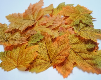 Set of 25 colors of autumn leaves