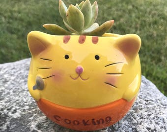 Yellow Cat Cooking Succulent Ceramic Planter (Home office decor pot)