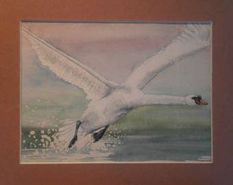 Original watercolour of a swan about to take flight