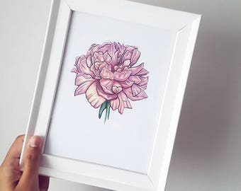 A5 Original Coloured Pencil Peony drawing on 300gsm heavyweight card
