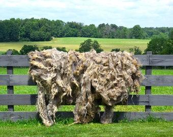 Churro Sheep Fleece - Midnight - 8.5 lbs.