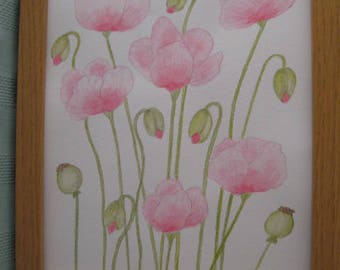 Watercolour original painting of pink poppies