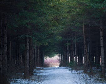 Trail at winter, in a plantation near my home and lights