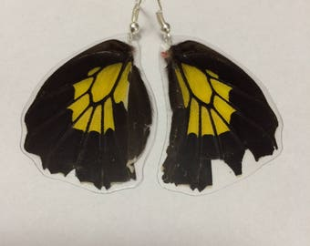 Troides Birdwing Butterfly Earrings (Bottom, Medium)