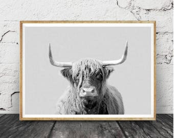 Highland Cow Print, Large Wall Art, Photography Print, Best Selling Art Print, Bull Photography, Black and White Art Print, Scottish Cow Art