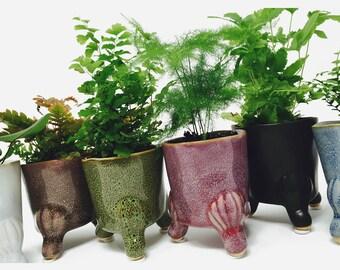 Little Feet Fern Pot w/ Plant