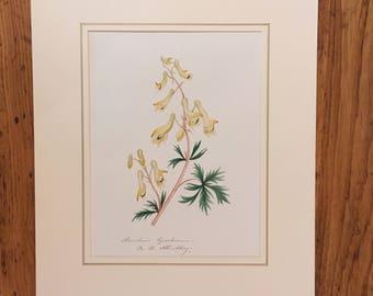 Original botanical painting
