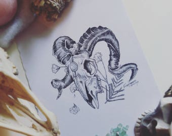 """Ink ram skull and flowers drawing,  """"Beautiful Death"""""""