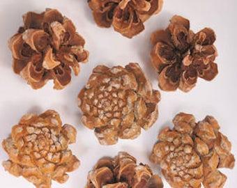 Pinyon Pine Cones | Pine Cones | Winter Decorations | Natural Pine Cones