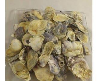 Oyster shell Talaba 4-5 cm 1 kg.