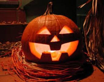 Pumpkin Jack O' Lantern 25+ seeds - heirloom seeds - vegetable seeds - garden seeds - pumpkin seeds - carving pumpkin seeds - jack-o-lantern
