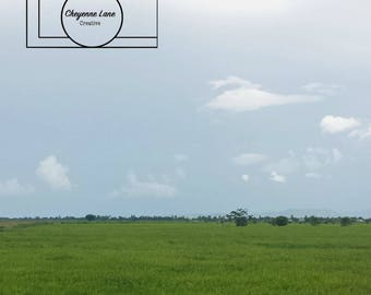 Stock Photo: Field with Sky