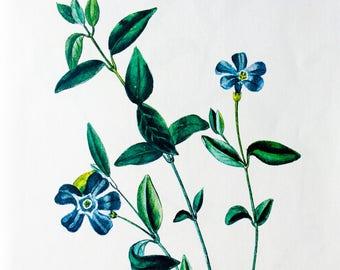 Wild Flower / Vintage Illustration / 1973 / Original Book Page / Interior Art / Wall Art / Home Decor