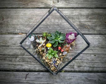 DIY Terrarium Planting Kit