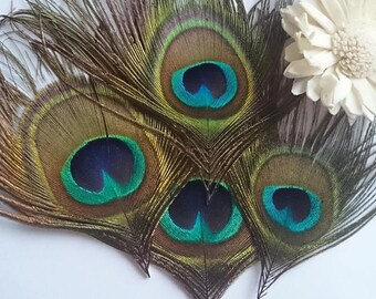 Set of 4 real peacock feathers *.