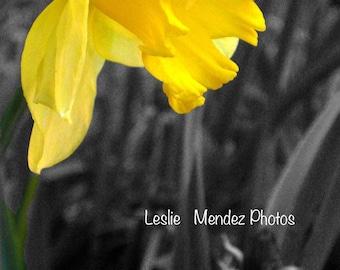 Yellow - 5x7 print