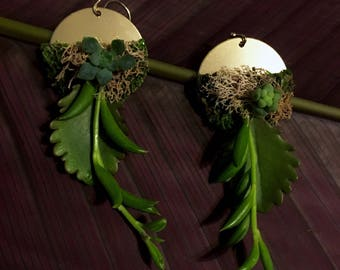 It's ALIVE!!!!  Succulent Jewelry.  Set of Succulent Earings with brass, moss, and Succulent varieties.