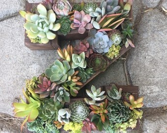 Succulent hanging garden or centerpiece letter shaped planter box for any occasion: wedding / birthday / baby shower / gift