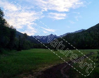 Mountain Meadow Path - Photo Download