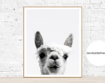 Alpaca Print, Alpaca Photo, Animal Print, Nursery Print, Woodlands Nursery, Digital Download, Black and White, Alpaca Wall Art, Alpaca Decor