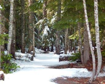 Trillium Lake Woods