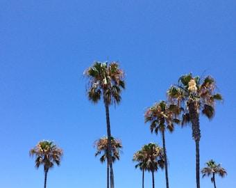 Palm Tree Digital Photo Print
