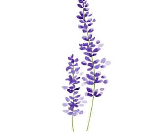 Add Dried Lavender