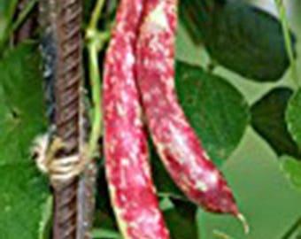 Bean, taylor dwarf hort. bush , heirloom, organic, non gmo seeds, colorful n tasty