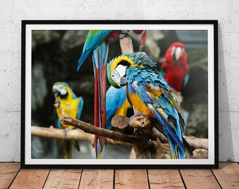 Colorful Parrot Photo // Blue & Gold Macaw Print, Wildlife Photography, Tropical Bird Wall Art, Nature Office Decor, Animal Home Decor