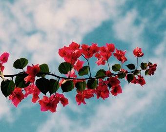Tropical Bloom