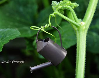 Macro Garden Watering Can in the Pumpkin Patch Digital Download - Digital Photograph Wall Art photography
