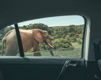 Co-Existence - Photo, Art, Print, Home Decor, Elephant, Animals, Wildlife Photography, Nature, Travel Photo, Wall Art, South Africa, gift