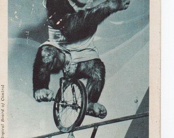Vintage Chimpanzee Star Postcard | 1949 St Louis Zoo Photograph Circus Trick Card | Tourism, Zoos, Chimp, Monkey | Paper Ephemera