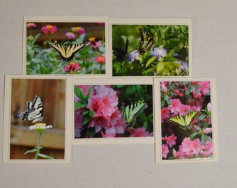 Yellow Tiger Swallowtail Greeting Card Set, Blank Card Set, Valentine Card Set, Butterfly Note Card Set,