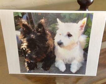 Scottie / Westie Card