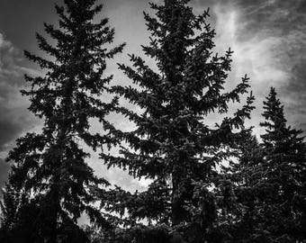 Twin Trees Photography Print